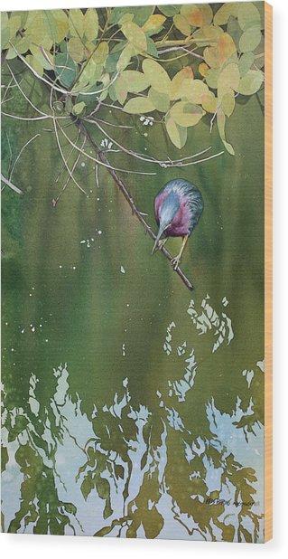 Green Heron, Red Mangrove Wood Print