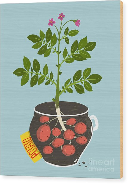 Growing Potato With Green Leafy Top In Wood Print