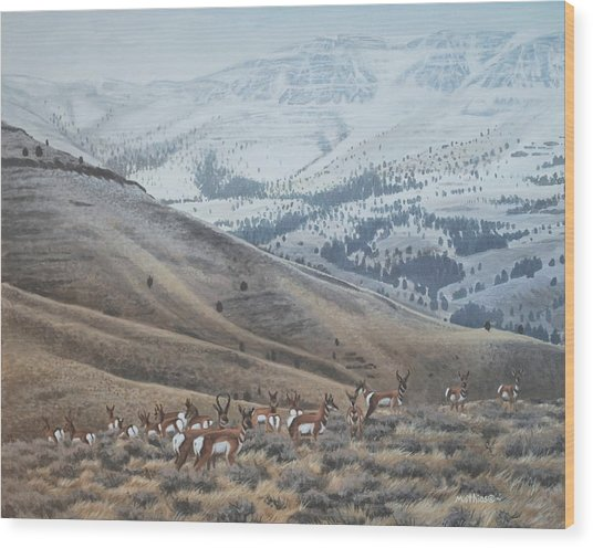 High Country Pronghorn Wood Print