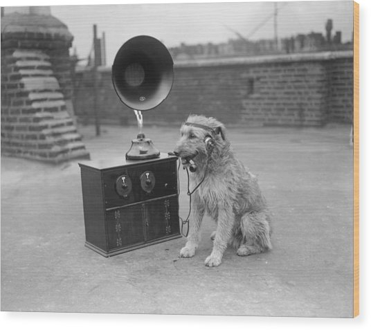 His Masters Voice Wood Print by Fox Photos