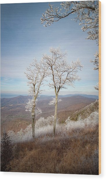 Hoarfrost Gathers Wood Print