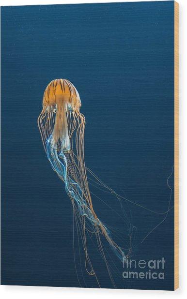 Jellyfish Wood Print by Ileysen