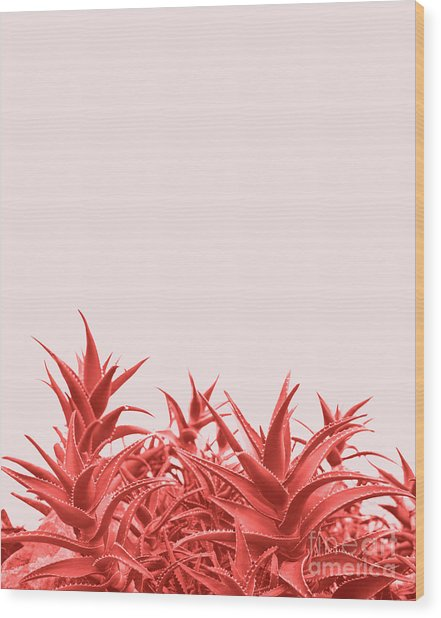 Minimal Contemporary Creative Design With Aloe Plant In Coral Co Wood Print
