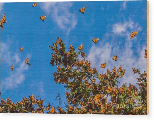 Monarch Butterflies On Tree Branch In Wood Print
