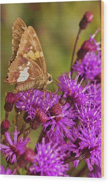 Moth On Purple Flowers Wood Print