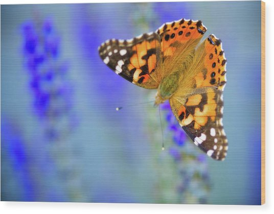 Wood Print featuring the photograph Painted Lady Butterfly by Nicole Young
