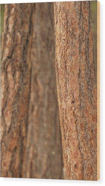 Ponderosa Pine Bark Detail Wood Print