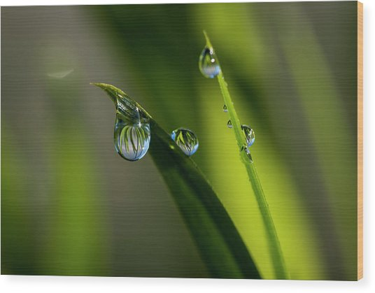 Rain Drops On Grass Wood Print