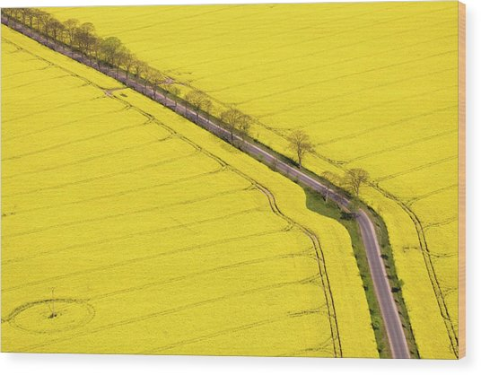 Rape Field Photographed From The Air Wood Print by Willi Rolfes