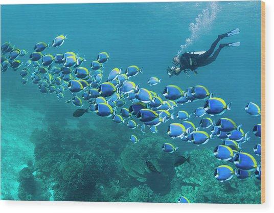 Scuba Diver With Camera Wood Print