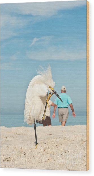 Snowy Egret Standing On Sandy Beach On Wood Print