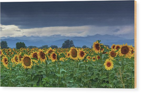 Wood Print featuring the photograph Sunflowers Under A Stormy Sky by John De Bord
