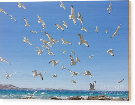 Swarm Of Sea Gulls Flying Close To The Wood Print