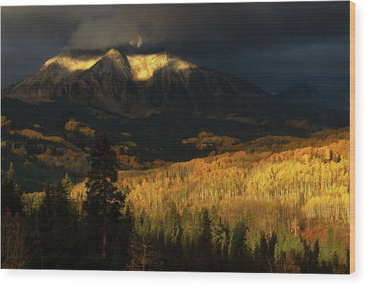 The Golden Light Wood Print