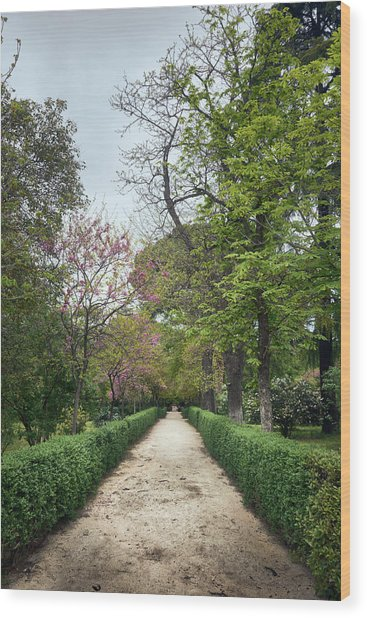 The Paths Of The Retiro Park Wood Print