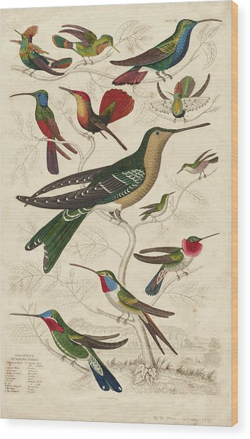 Trochilus, Hummingbirds Wood Print
