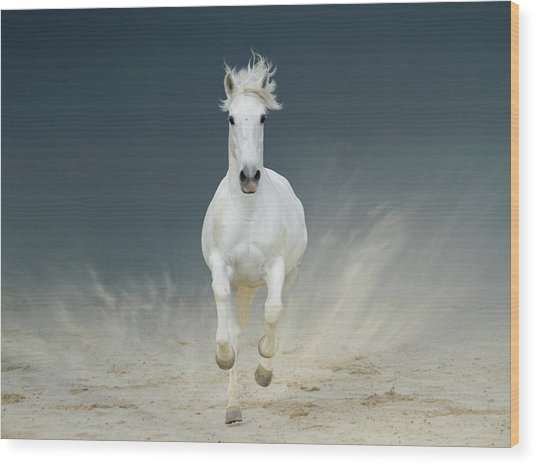 White Horse Galloping Wood Print by Christiana Stawski