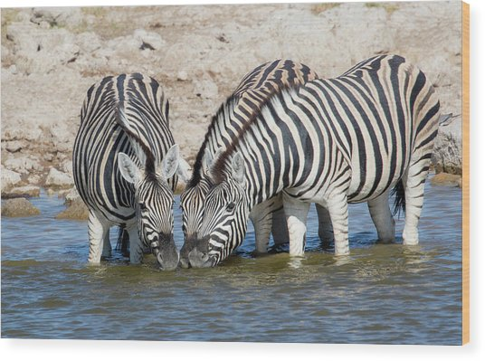 Zebras Lined Up Drinking At Waterhole Wood Print by Darrell Gulin