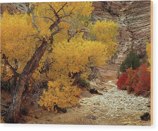 Zion National Park Autumn Wood Print