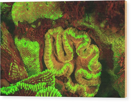 Natural Occurring Fluorescence Wood Print by Stuart Westmorland