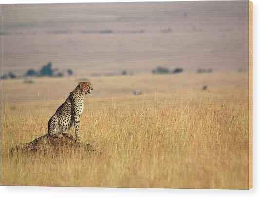 Alert Cheetah Wood Print