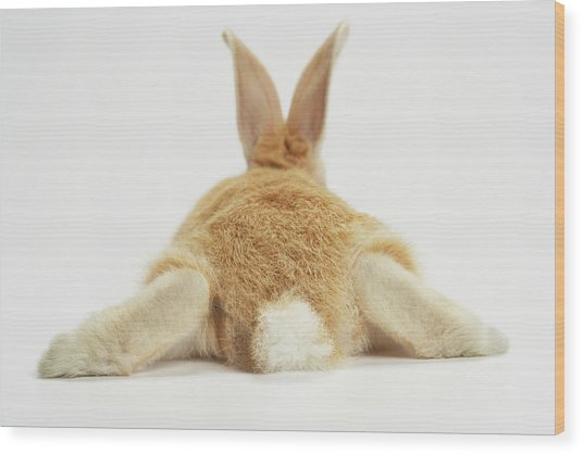 Beige Bunny Rabbit On White Background Wood Print by American Images Inc