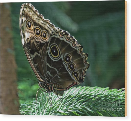 Butterfly Wood Print by Elijah Knight