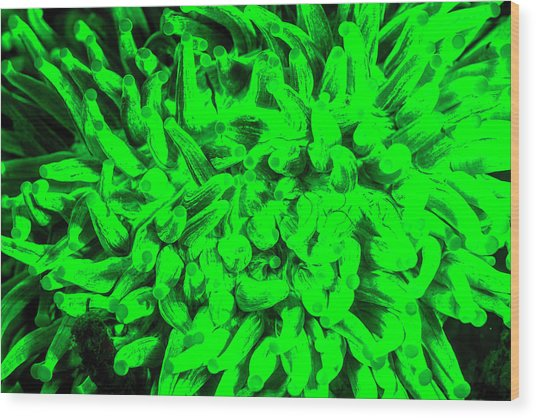 Natural Occurring Fluorescence Emitted Wood Print by Stuart Westmorland