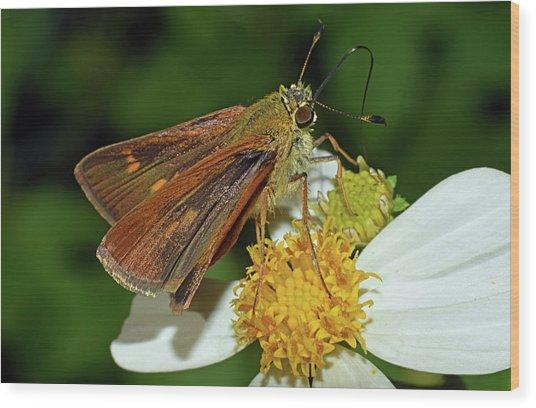 Skipper Butterfly Wood Print