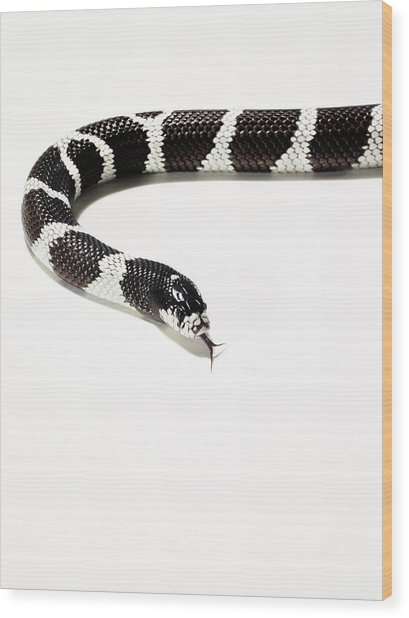 Snake Photographed Against A White Wood Print