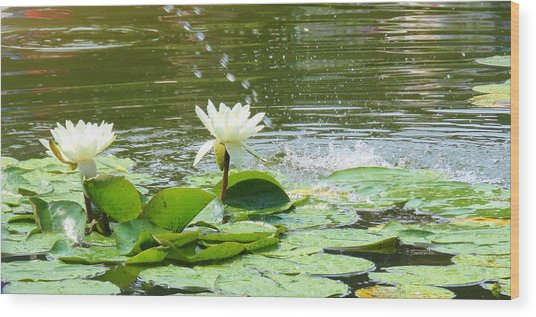 2 White Water Lilies Wood Print