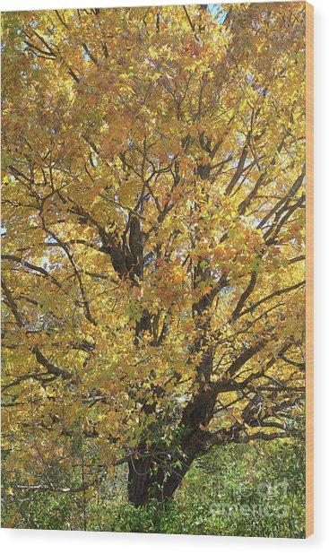 2018 Edna's Tree Up Close Wood Print