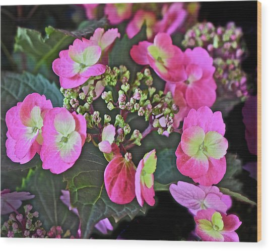 2019 June At The Gardens Tuff Stuff Hydrangea Wood Print
