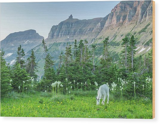 Usa, Montana, Glacier National Park Wood Print by Jaynes Gallery