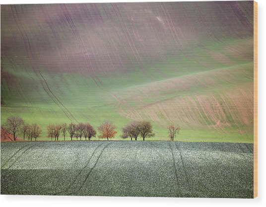 Autumn In South Moravia 3 Wood Print