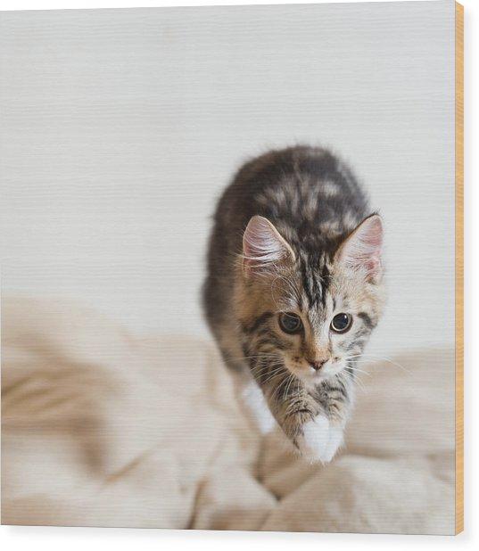 Jumping Kitten Wood Print by Ryuichi Miyazaki