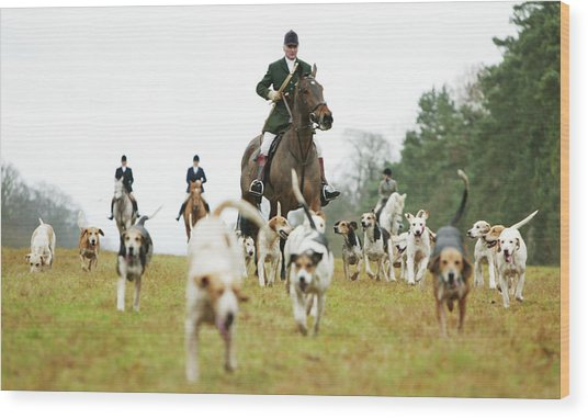The Beaufort Hunt, Gloucestershire Wood Print by Brent Stirton