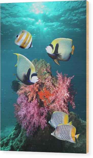 Tropical Coral Reef Fish Wood Print