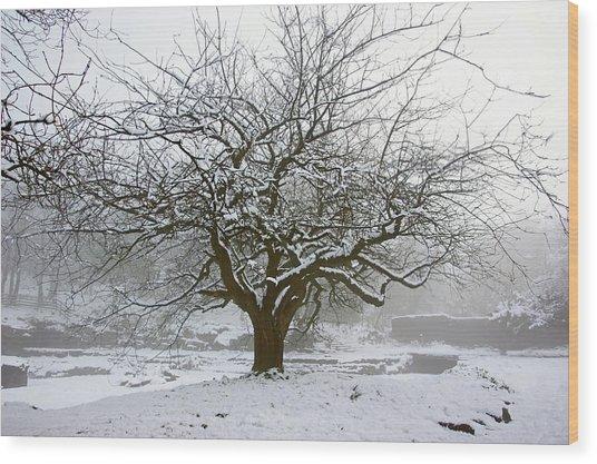 30/01/19  Rivington.  Japanese Pool. Snow Clad Tree. Wood Print