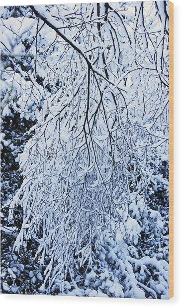 30/01/19  Rivington. Snow Covered Branches. Wood Print