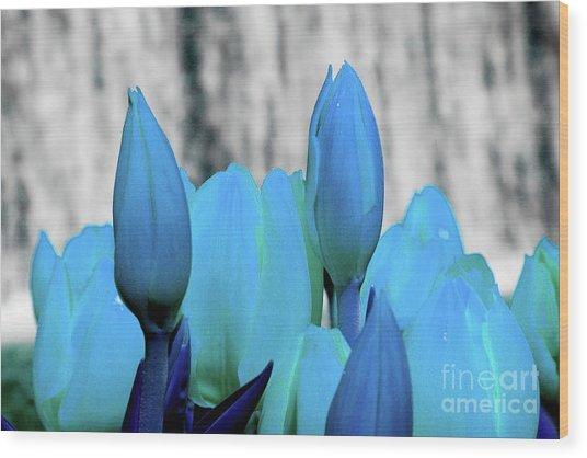 4-8-2010img6893abcdefghijk Wood Print
