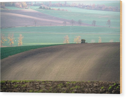 Autumn In South Moravia 5 Wood Print