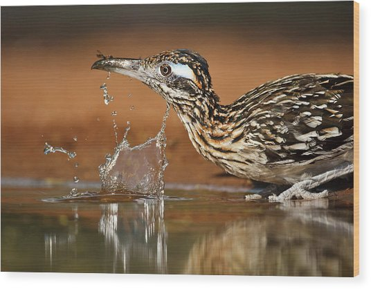Greater Roadrunner Geococcyx Wood Print by Danita Delimont