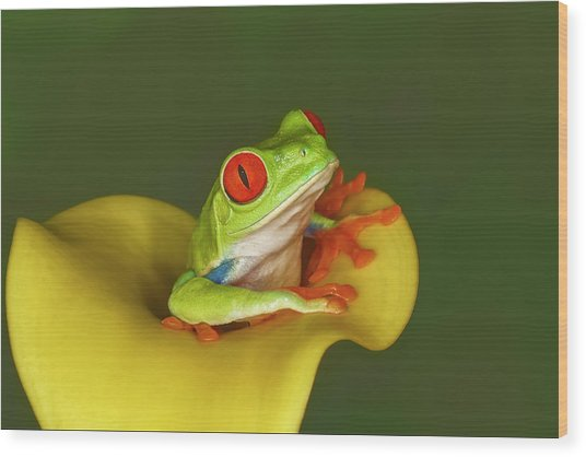 Red-eyed Tree Frog Wood Print by Adam Jones