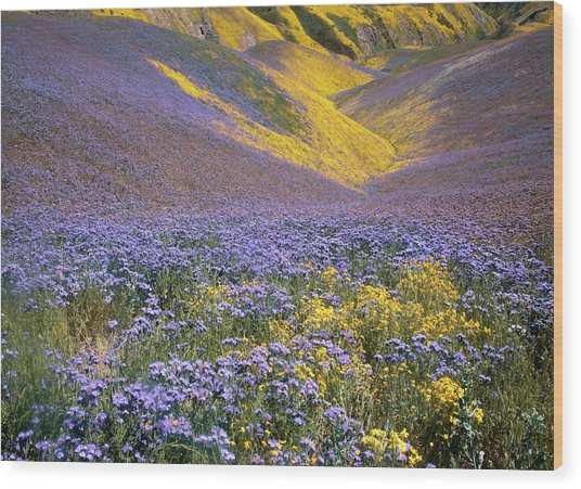 Usa, California, Carrizo Plain National Wood Print by Charles Gurche