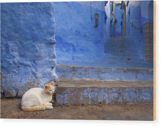 A Cat In Chefchaouen Wood Print