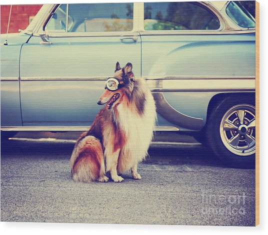 A Collie Posing For The Camera In Front Wood Print