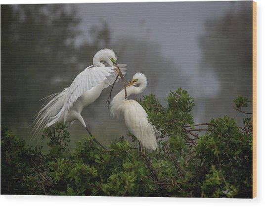 A Couple Of Birds Wood Print