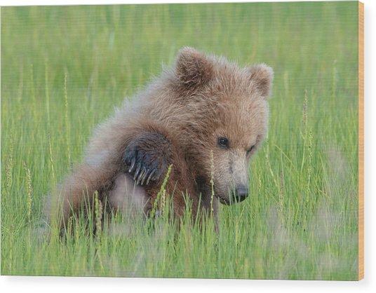 A Coy Cub Wood Print