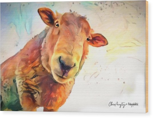 A Curious Sheep Called Shawn Wood Print